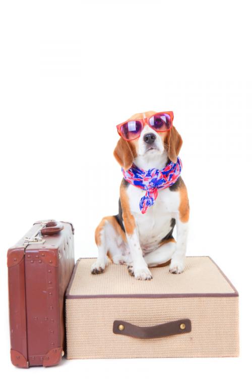 vihetem-a-kutyat-nyaralni2