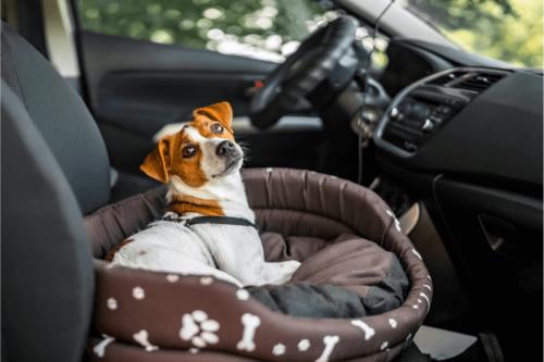 igy-utazz-kutyaval-autoban